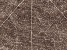 Antique Texture 36 by Inthename-Stock