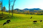 Reeves Dairy Farm 5600 by TommyPropest-Candler