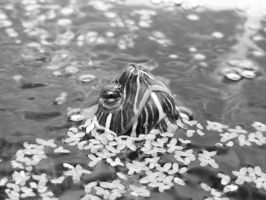 Turtle by murtho