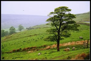 The Peak District - X by jerry486