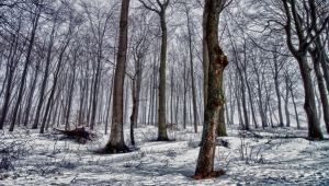 Winter Forrest by BrknRib
