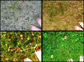 Green grass of Home: 4 Seasons by Tomazz