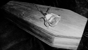 Ghost of a Rose by Akhenaten-Aten