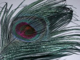 A feather of a peacock by tsvettie