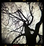 les branches II by quadratiges