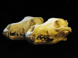 Two wolf skull FOR SALR by WoroTax