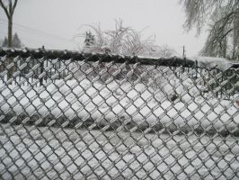 Frozen Fence by BarkingLizards