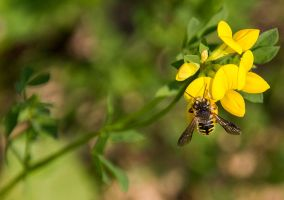 Bee by sequential