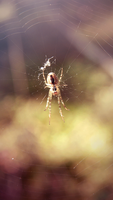 Spider 2 by Irkis