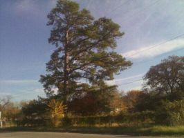 The tree that just sort of pisses me off by Lyricsloveandbooks