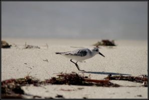 Beach with Running Bird 4 by Macomona