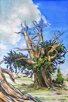 Crooked Tree by Weier1138