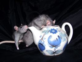 Rats and tea 01 by Villainess-Vi