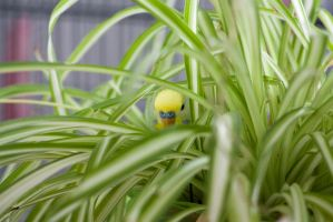 Budgie? What budgie? by SianaLee