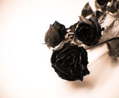 dead roses... by square-brain