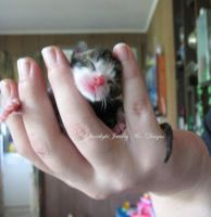 New Born Kitten by LadyStarrlight