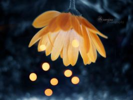 nature's lights on by blondepassion