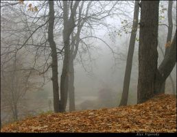 Comfortable Fog by ukraine-photo