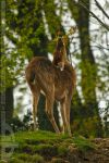 enjoying the nature by CrystalGraphic
