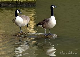 Courting Couple by Mark-Allison