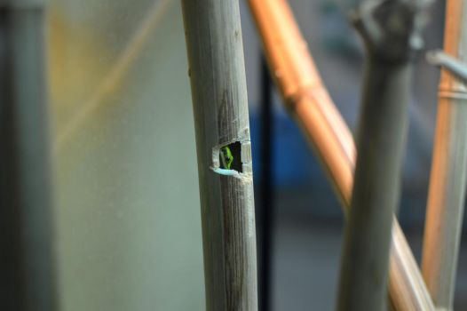 Peeping Frog by Safyre