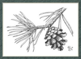 Framed Small Pinecone by Kittenpants