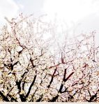 A beautiful mess called Spring. by Odessa-Himijo