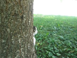 tree cat is watching by Insomnia-Condrioid