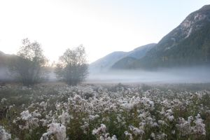 Misty Meadow Stock by leeorr-stock
