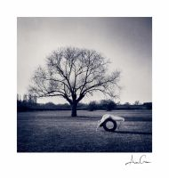 of dead trees: the bend by AncaCernoschi