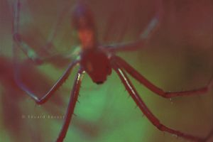 spider 3 by eduardkov