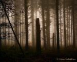 Sloping two stumps by GaiusNefarious