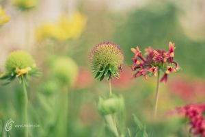 Nature by fahadee