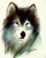 Balto the wolf-dog by ISHAWEE