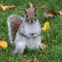 Squirrel 01 by LydiardWildlife
