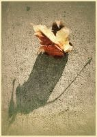 iPhoneography,   Fall Shadow by Gerald-Bostock
