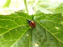 lady bug by loghry