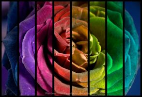 Rainbow Rose by eyedesign