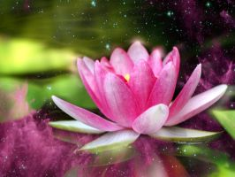 LOTUS by AvatarBuddha