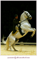 Lipizzaners - I by Summerly