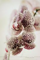 Orchid III by 1001G