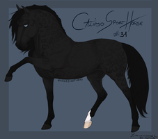 Calipso Sport Horse Import #31 by Horse-Emotion