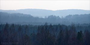 Bluish Layers of a Forest by rici66