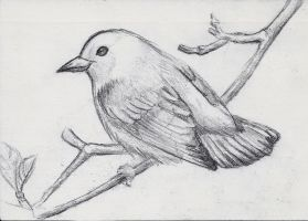 Small Sketch: Songbird by JacquelineChroma