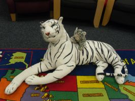 White tiger and snow leopard plush in a librey by Natalia-Clark