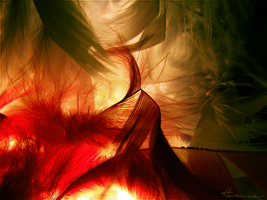 Plumes 2 by Flora-Silve