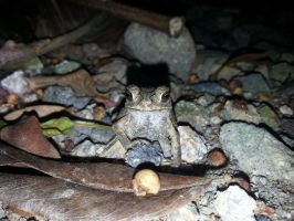 Toad 26Oct2014 by RiverKpocc