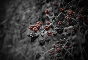 Poison berries by Broxmonkey