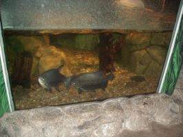 Fishies 1 by Ironhold