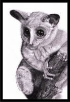 Bush Baby revised by KathyHaddy